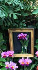 海洋博物熱帯亜熱帯都市緑化植物園の蘭①
