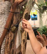 海洋博物熱帯亜熱帯都市緑化植物園で見られる昆虫のカブトムシ①